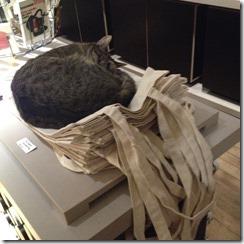 מוזיאון חתולים
