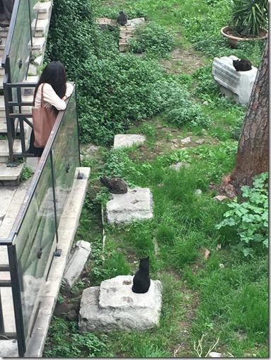 חתולים רומא 1