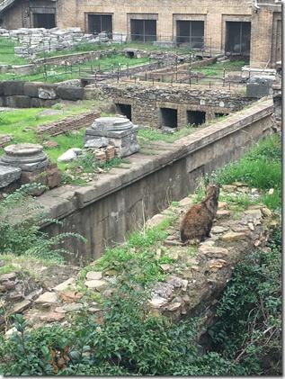 חתולים רומא 2